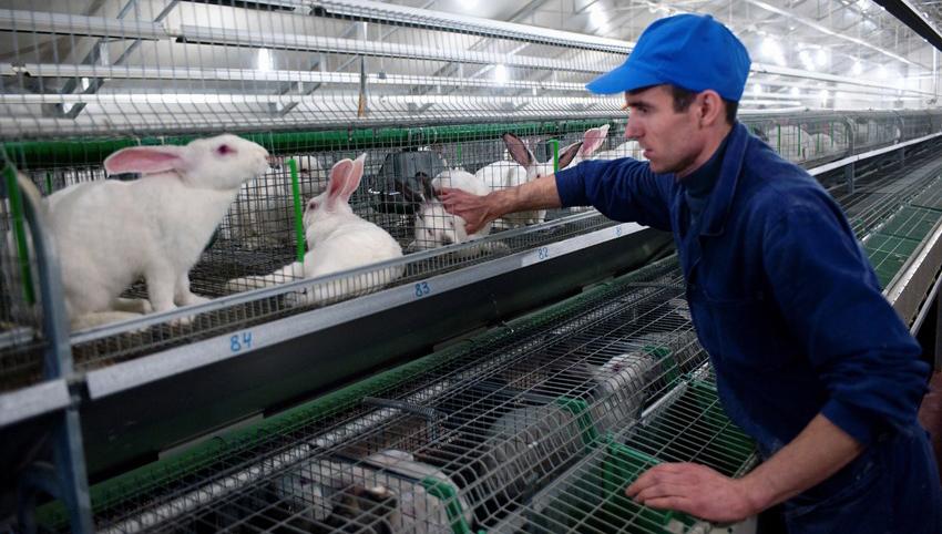 Как построить кроличью ферму